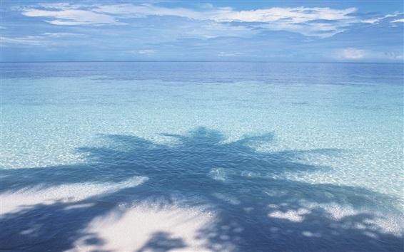 Wallpaper Blue sea, palm tree shadow
