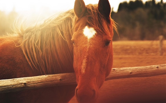 Fond d'écran Vue de face de cheval brun, clôture, soleil