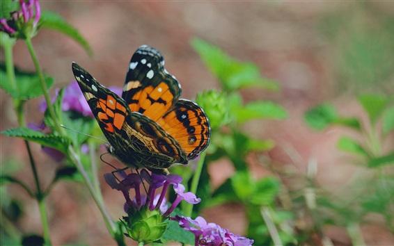 壁紙 蝶、羽、花、葉