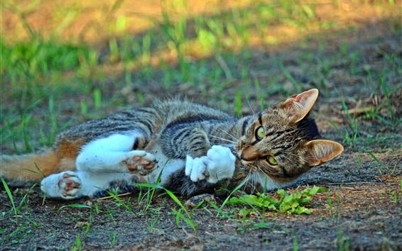 배경 화면 고양이 장난이 심하, 땅, 잔디