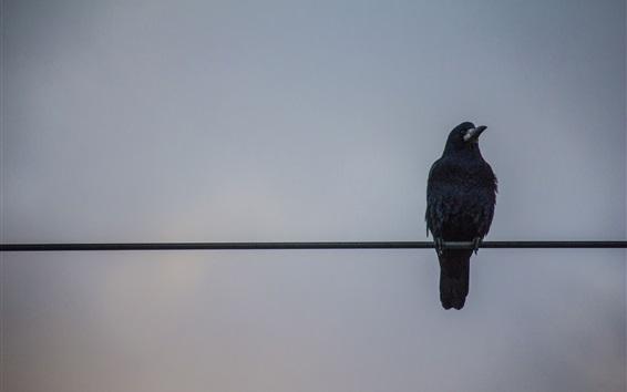 Fond d'écran Corbeau debout sur le fil