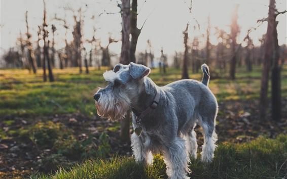 Wallpaper Cute dog, fluffy, grass