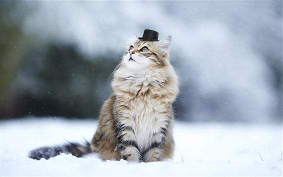 Papéis de Parede Cute gatinho, chapéu, humor