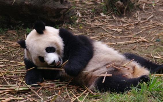 Papéis de Parede Cute panda brincalhão no chão