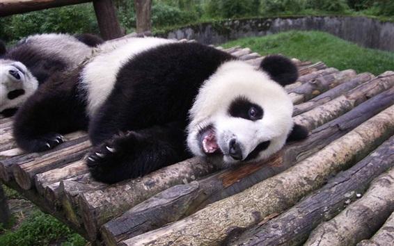 Papéis de Parede Panda bonito descansa na madeira