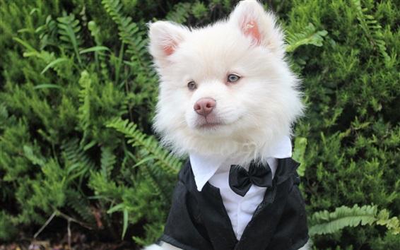 Wallpaper Cute white dog like a gentleman