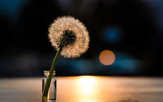 Wallpaper Dandelion, glass cup, water drops, light