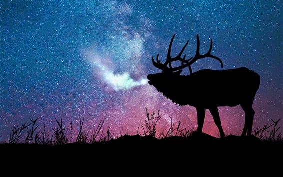 Fond d'écran Cerf, silhouette, étoilé, galaxie, étoiles, nuit