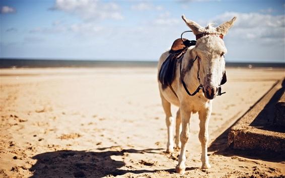 Wallpaper Donkey, sunshine