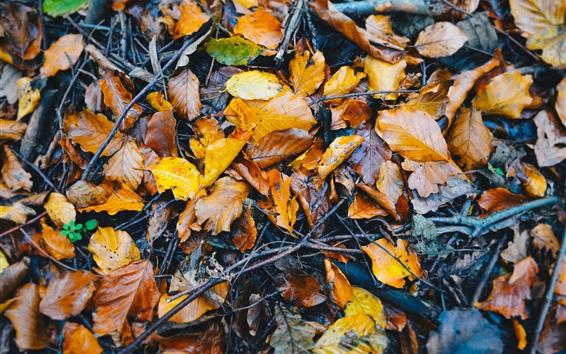 Обои Опаленная листва на земле, влажная