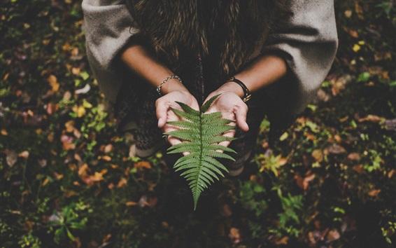 Wallpaper Fern leaf on hands