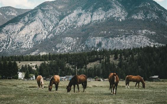 Wallpaper Five horses, mountain, trees, grass