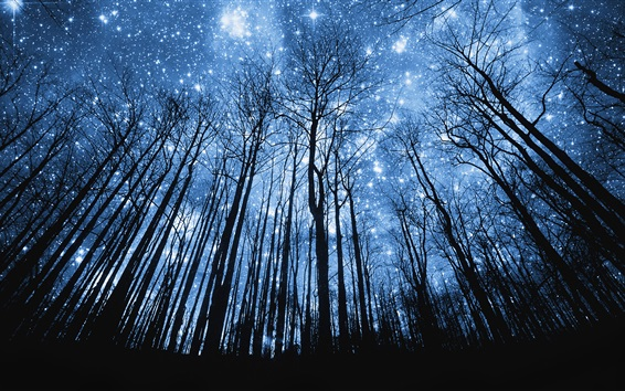 Wallpaper Forest, beautiful blue starry, night