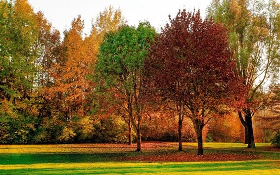 Wallpaper Forest, trees, grass, autumn