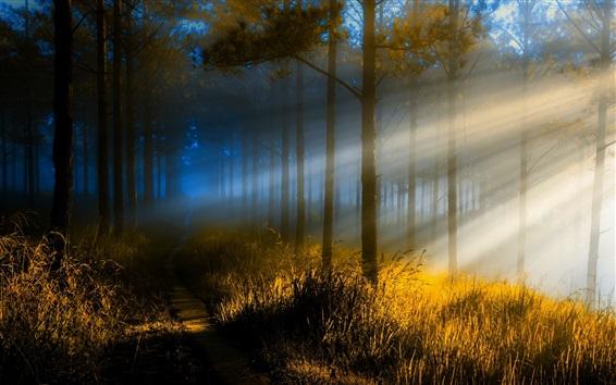 壁纸 森林,树木,草,路径,太阳光线,雾,早上