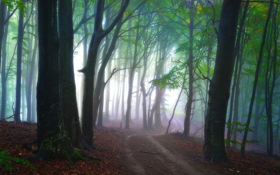 Fond d'écran Forêt, arbres, chemin, brouillard, paysages de la nature