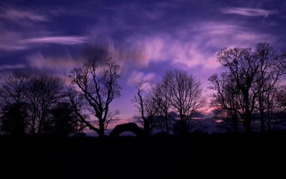 Wallpaper Forest, trees, silhouette, evening