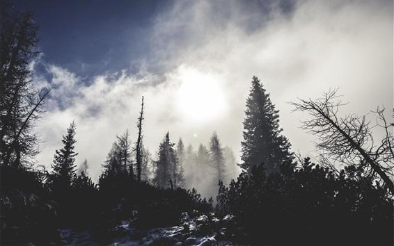 Обои Лес, деревья, снег, туман, утро