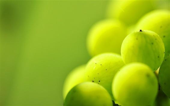 Обои Зеленые ягоды, фрукты, макросъемка