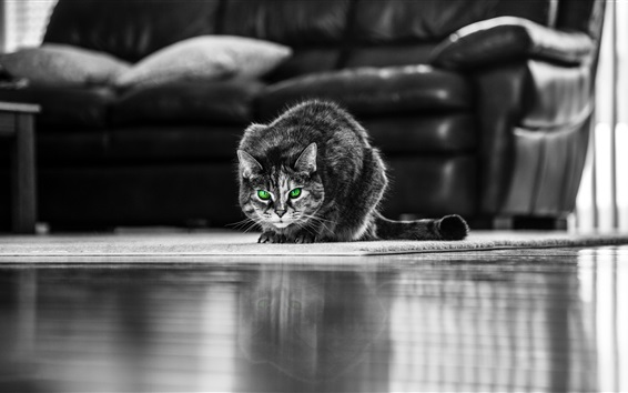 Papéis de Parede Gato cinza de olhos verdes, vista frontal, sala de estar
