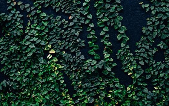 壁紙 緑の葉、植物、壁