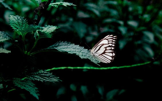 Wallpaper Green leaves, white black wings butterfly