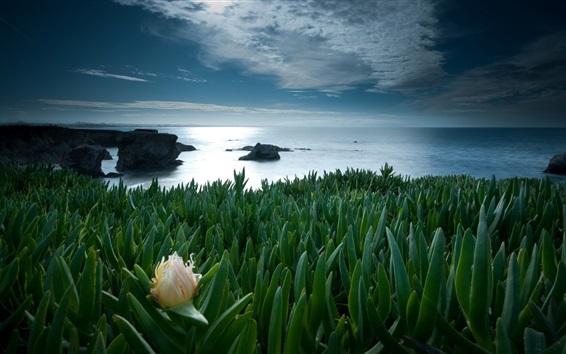 Fond d'écran Plantes vertes, feuilles, mer, fleur, nuages, crépuscule