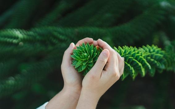Wallpaper Hands, bush, green leaves
