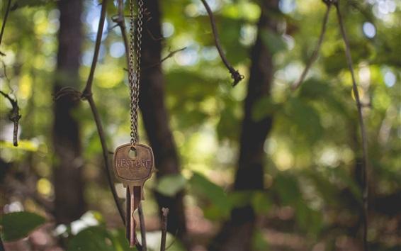Chave, corrente, floresta Papéis de Parede Preview
