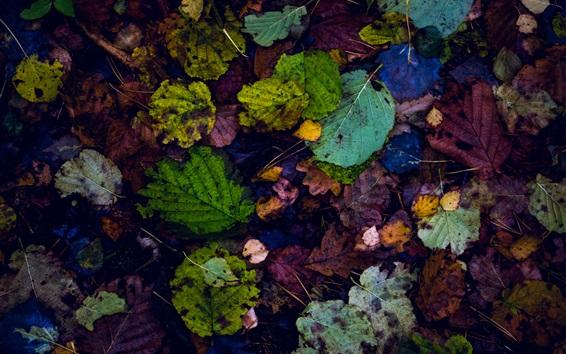 Обои Многие опавшие листья, красочные, земля, осень