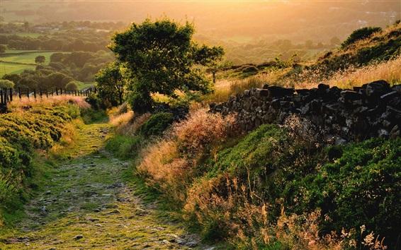 Wallpaper Nature landscape, trees, grass, morning, sunshine