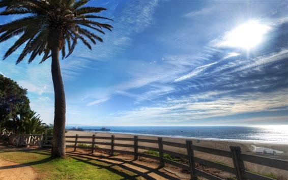 Wallpaper Palm tree, beach, fence, sea, sunshine