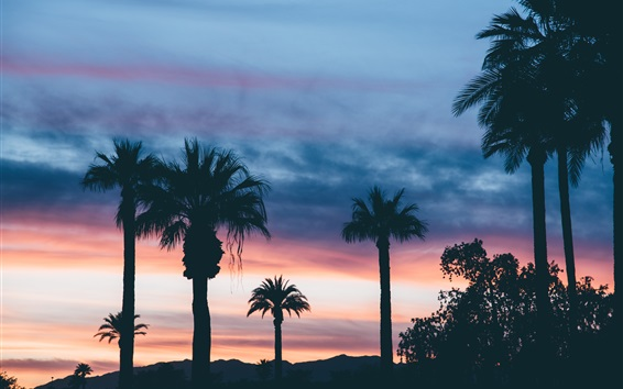 Fond d'écran Palmiers, crépuscule, coucher de soleil, nuages