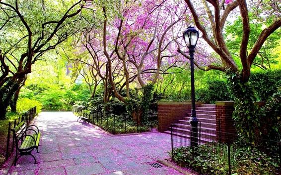 Обои Парк, цветение деревьев, лампа, скамейка, весна
