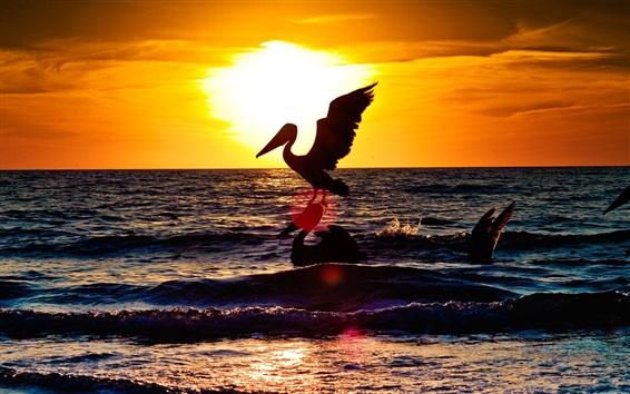 Обои Пеликан, закат, море