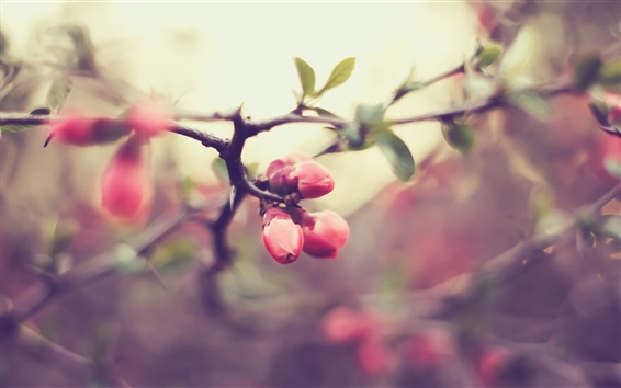 Wallpaper Pink flower buds, twigs, spring, bokeh