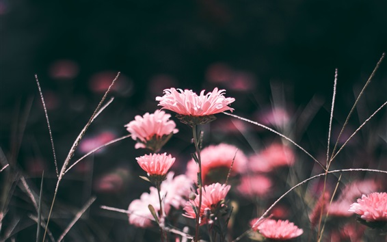 Papéis de Parede Flores cor-de-rosa, borrão