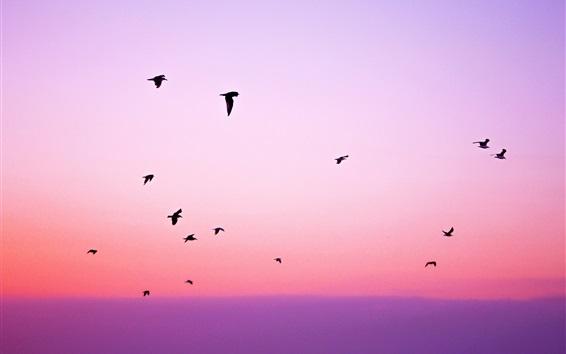 Обои Фиолетовое небо, полет птиц, силуэты, закат