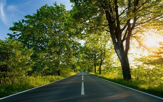 Fond d'écran Route, arbres, soleil