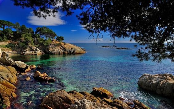 Wallpaper Sea, rocks, trees