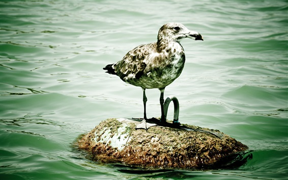 Обои Чайка, камень, море