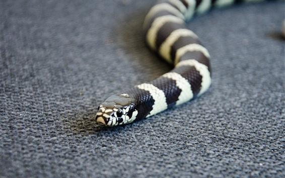 Papéis de Parede Serpente, branco e preto