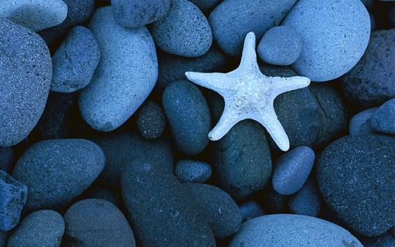 Fondos de pantalla Estrella de mar, piedras