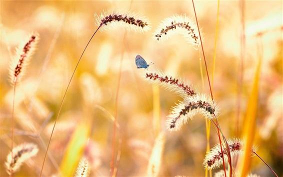 Papéis de Parede Verão, grama, borboleta