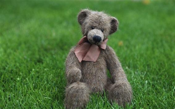 Wallpaper Teddy, bear toy, grass