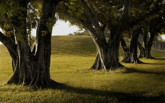 Wallpaper Trees, grass, shadow