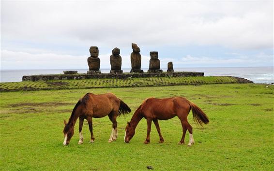Papéis de Parede Dois cavalos castanhos, grama, pedras, mar