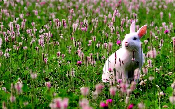 Papéis de Parede Coelho branco nas flores