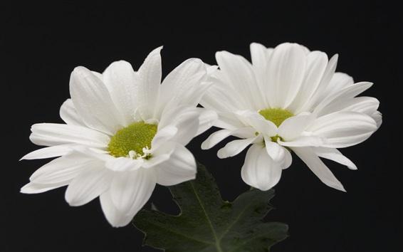 Wallpaper White flowers, black background