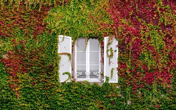 배경 화면 나뭇잎에 숨겨진 창